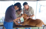 Veterinary Surgeon busy with a medical checkup of a dog on one of the MECHEM-Projects.