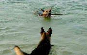 MDD dogs in the DRC relaxing on the shores of Lake Tanganyika after a day's hard work